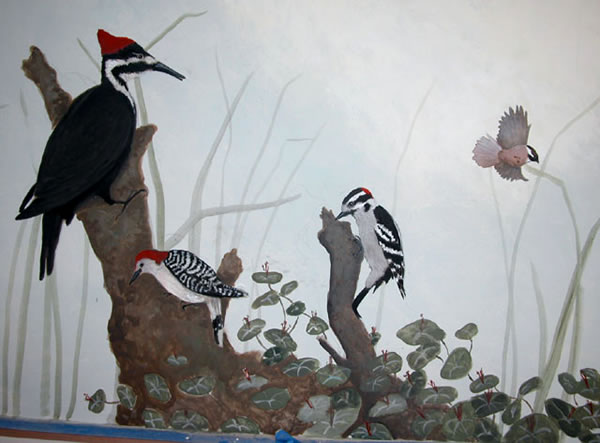 coxwoodpeckers